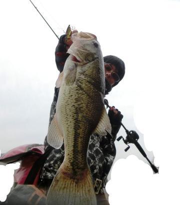 Bass Jack!!