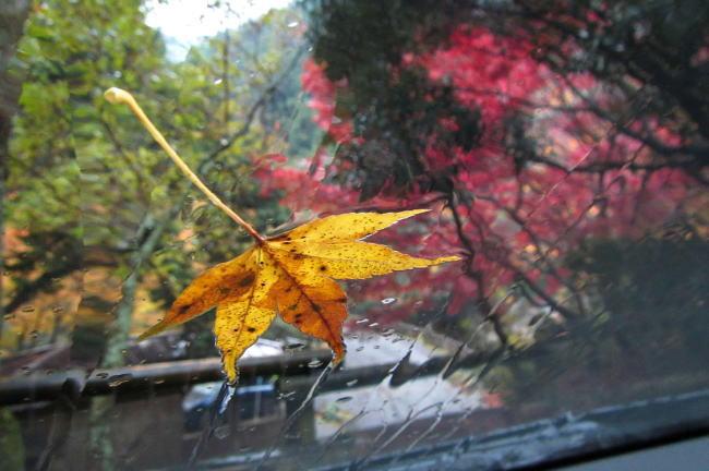 雨の滑床渓谷散歩〜ぶらり西四国〜