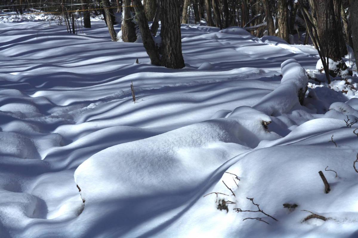 なだらかの雪のカーブに影を落とす木々が美しい模様を描いていました 初めての雪の森