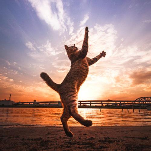 ワニブックスは、1月25日に写真集「猫ジャンプ(間宮 誠爾/著)」を発売する。
