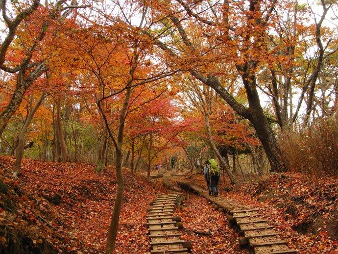 落ち葉と紅葉を愛でながら・・・ゆっくり歩きます 霜柱ですね・・・もうこ... 紅葉に間に合った大